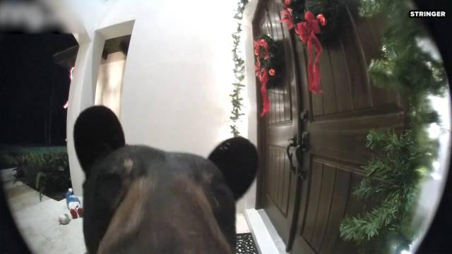 Und plötzlich klingelte ein Bär an der Tür ...