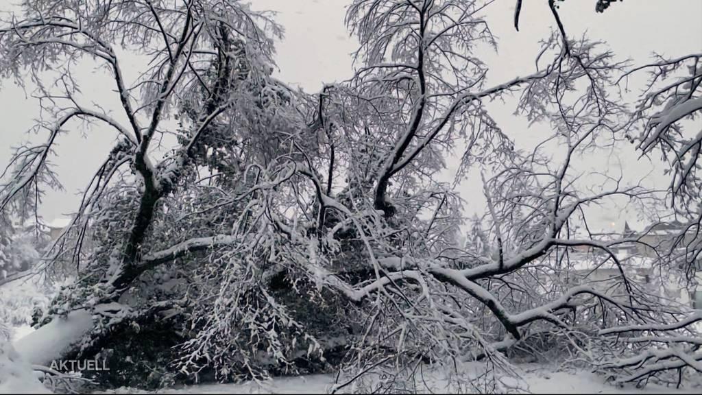«Flock-Down»: Der Aargau versinkt im Schnee