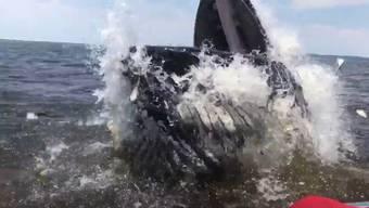 Gleich neben dem kleinen Boot schiesst plötzlich ein Buckelwal aus dem Wasser – direkt vor die Handykamera von Paul Ziolkowski.