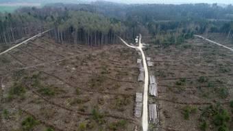 Pressekonferenz zu «Ein Jahr nach Burglind und mitten im Klimawandel» in Kestenholz