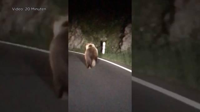 Beatenbucht: Ist der Bär eine Gefahr für die Bevölkerung?