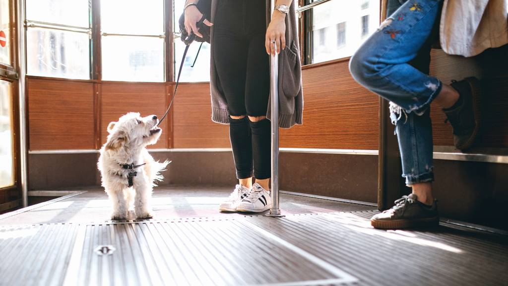 SBB ersetzen Hunde-GA durch Hundepass – Hündeler sind wütend