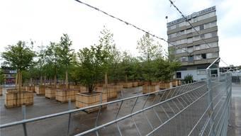 Auf dem Feldreben-Areal in Muttenz stehen bereits die eingetopften Bäume bereit, die den Aussenbereich des Asylzentrums verschönern sollen.