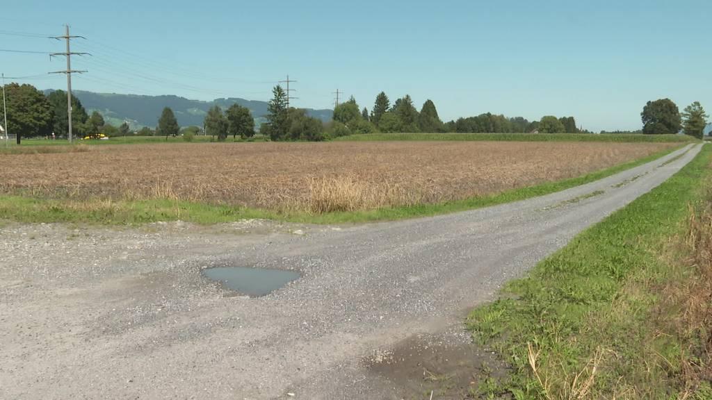 Faule Ernte: Wegen Nässe bedroht ein Pilz Kartoffelfelder