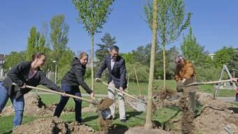 Wenn in Basel auf öffentlichem Grund ein Baum gepflanzt wird, wird dieser in einer Datenbank erfasst. Liegt diese, wie in Zürich, also Open Data vor, können Entwickler mit den Daten neue Anwendungen programmieren – beispielsweise eine App für Allergiker, die anzeigt, welche Orte in Zürich Menschen mit einer Birken-Pollen-Allergie meiden sollten.
