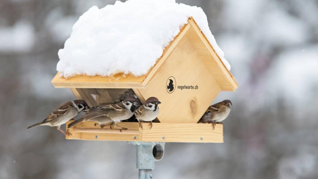 Vogelwarte gibt Empfehlungen zum Füttern von Vögeln im Winter