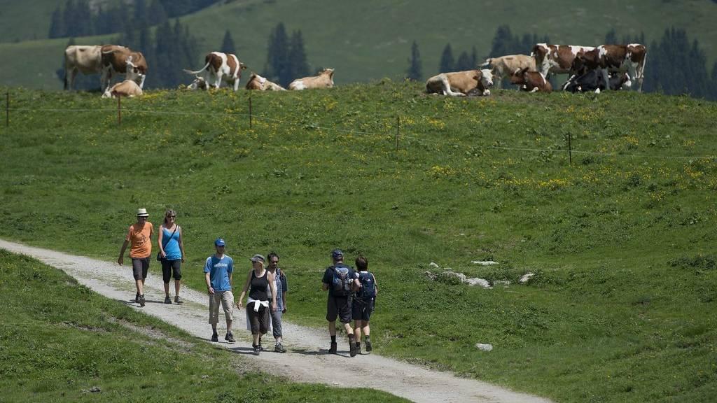 Meist lassen sich Kühe von Wanderern nicht beeindrucken. Doch es geht auch anders. (Symbolbild)