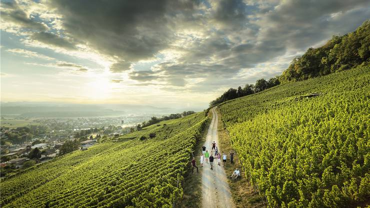 Über den Weinboden lässt sich schön wandern: Touristen in einem Weinberg in Döttingen AG