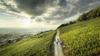 Stein und Wein - Der geologische Weinatlas der Schweiz