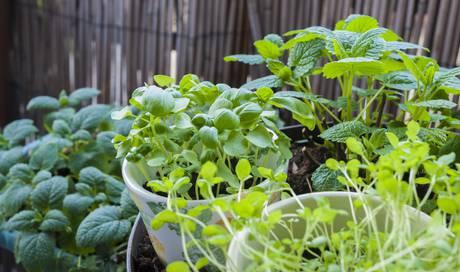 kr utergarten bei diesen pflanzen brauchen sie einen gr nen daumen wohnen leben und stil. Black Bedroom Furniture Sets. Home Design Ideas