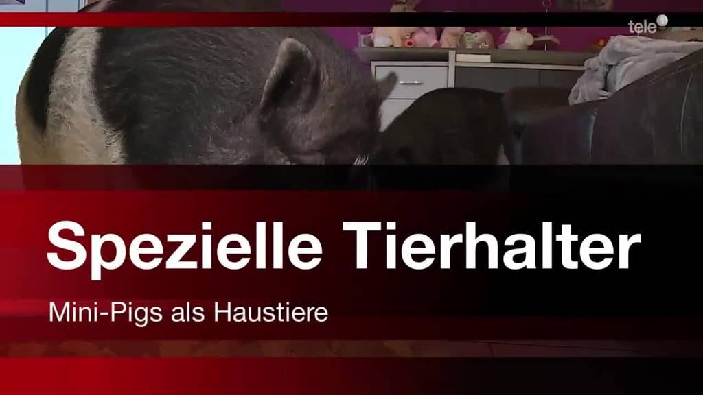 Spezielle Tierhalter - Mini-Pigs als Haustiere