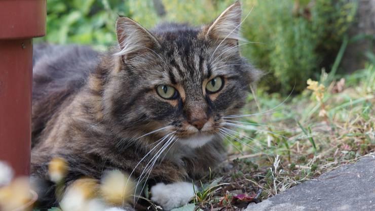Ein Kleintier – vermutlich eine Katze – rannte über die Strasse und stiess mit der Fahrradfahrerin zusammen. (Symbolbild)