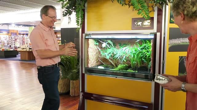 Die Riesensichelschrecke, ein lautes Exemplar der Insektenausstellung im Shoppi Tivoli.