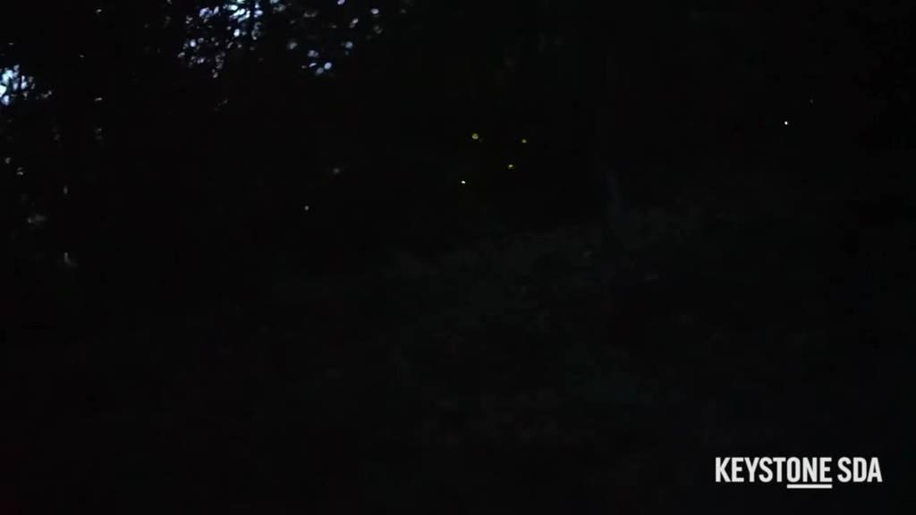 Glühwürmchen fliegen mitten in Zürich