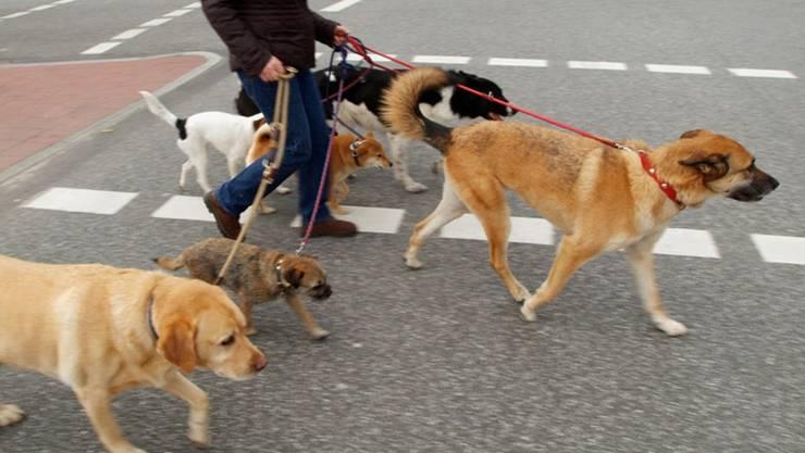 Unfall zwischen einem Töfffahrer und einem Hund - beide verletzt. (Symbolbild)