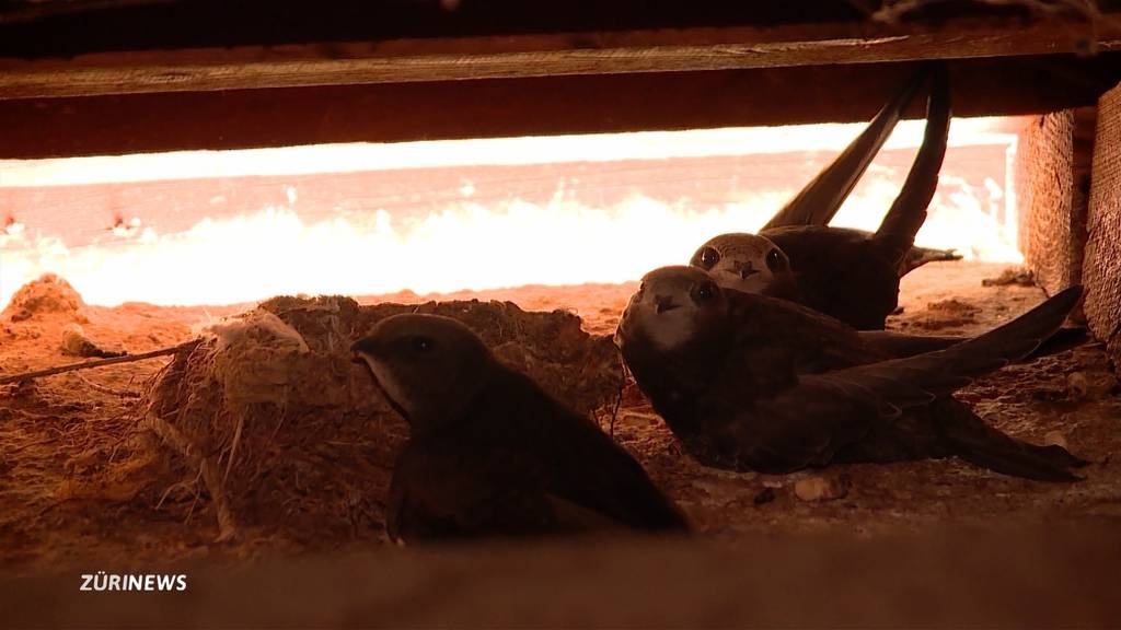 30 Vögel stoppen den Spitalabbruch