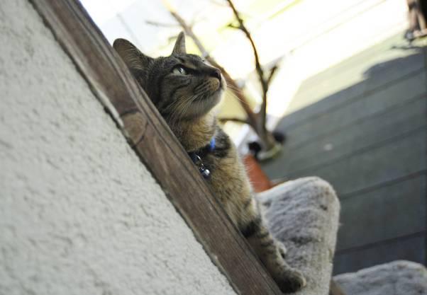 Neben Katzen werden auch Igel, Vögel, Schlangen und Taranteln abgegeben.
