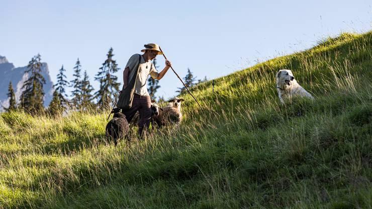 Denis Handschin hütet Schafe im bündnerischen Safiental.