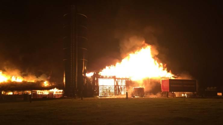 Ein Grossbrand hat in der Nacht auf Samstag in Oberriet SG ein Heulager und einen angrenzenden Kuhstall vollständig zerstört. Alle Tiere konnten gerettet werden.
