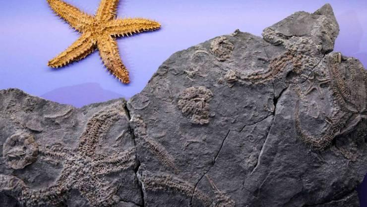 Blick auf die im Aargau gefundene Steinplatte.