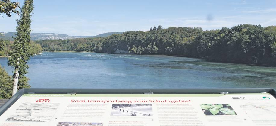 Der Blick von der renaturierten Aue Chly Rhy  in Rietheim auf den Rhein zeigt, dass dieser hier zurück erhalten hat, was man ihm genommen hat.