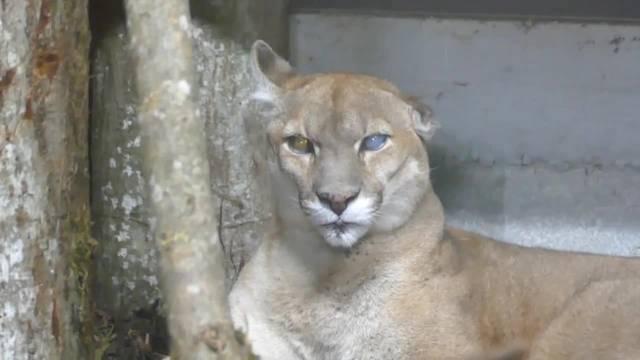 Leserwandern 14. Etappe: Nach dem Wandern konnten sich die Teilnehmer noch ein paar Tiere im Siky Park in Crémines anschauen