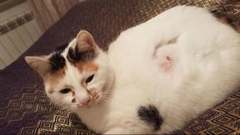 In Lörrach schoss ein Katzenfeind bereits zum 3. Mal mit einem Luftgewehr auf eine Katze. Dabei trifft es immer die Haustiere der gleichen Familie. Beitrag des Regionalsenders «Tele M1» vom 2.12.2017.