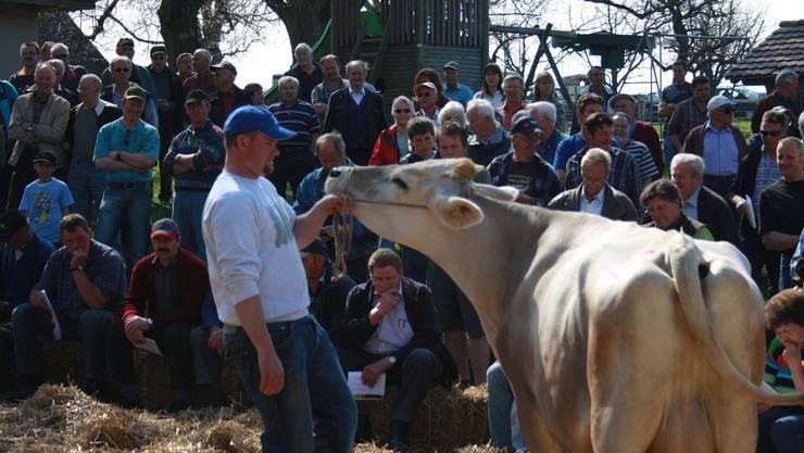 Fast immer ein Publikumsmagnet: Die Braunviehauktion auf dem Horben zieht traditionell zahlreiche Besucher an.