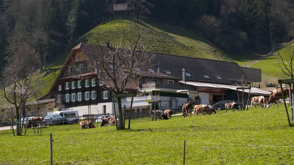 Hof Trüllental / Umbau eines Bauernhauses / Ungezieferbefall im Eigenheim