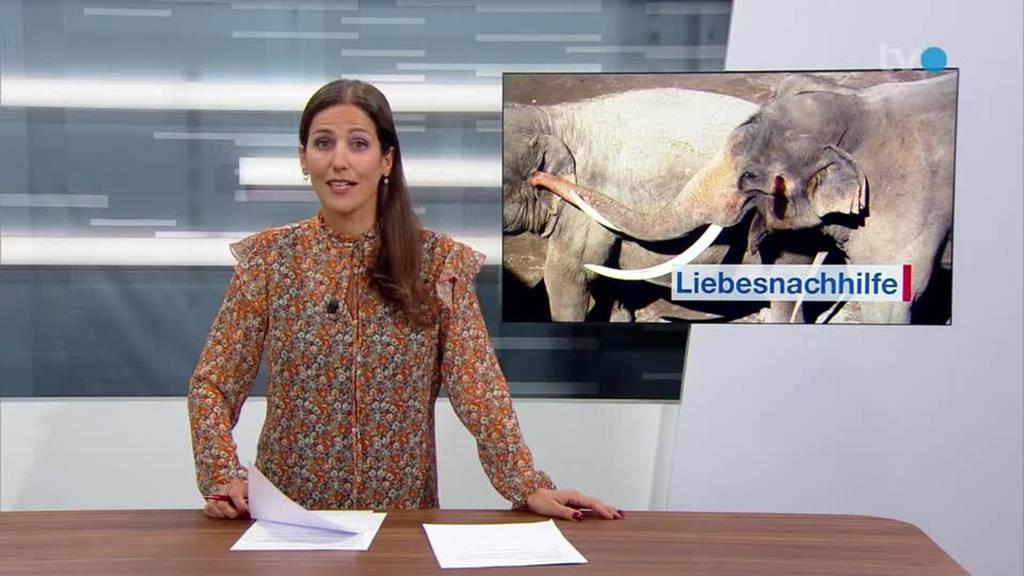 Fleissige Elefanten: Knies Kinderzoo hofft auf Nachwuchs