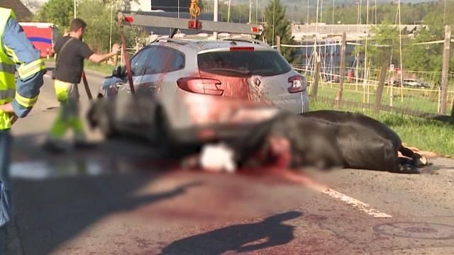Pferde-Unfall Brunegg: Ursache ist noch unklar. Der Besitzer der Irländerstute vermutet, dass ein Insekt das Tier erschreckt hatte. Die Hauptstrasse zwischen Brunegg und Birr wurde für fast zwei Stunden gesperrt.