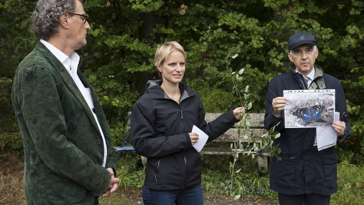 Stadtammann Geri Müller, Sarah Niedermann (Projektleiterin ecolinnea), und Stadtoberförster Georg Schoop erklären das Projekt Pionierbäume im Badener Wald