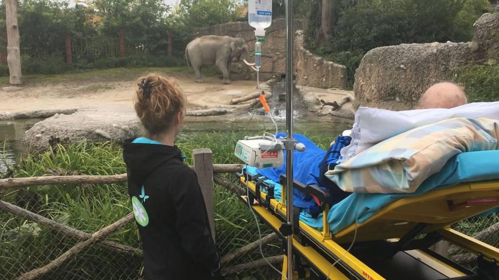 Meistens haben die Menschen einfache Wünsche, wie einen Besuch im Zoo.