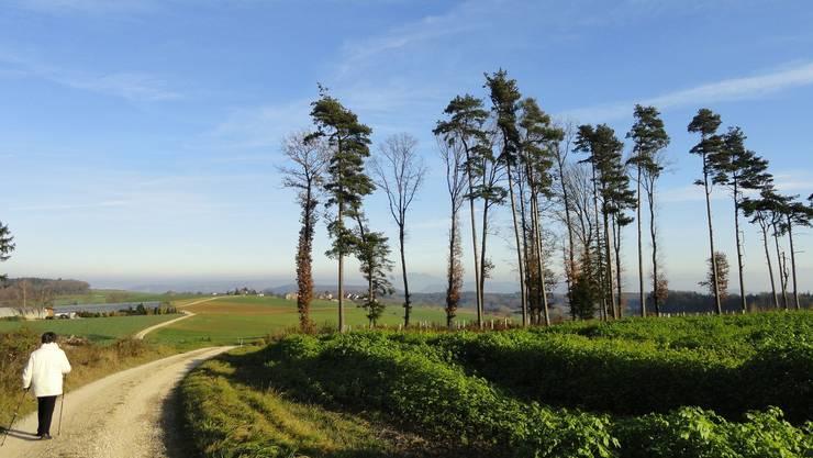 Wanderer auf dem Bözberg sollen ab 2013 nicht mehr so viele Gemeindegrenzen überschreiten.