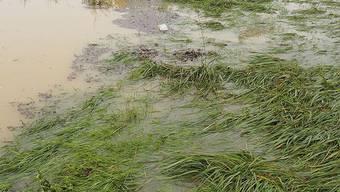 Oft kann das Wasser nicht mehr richtig ablaufen und dringt dann in die Gebäude ein. (Symbolbild)