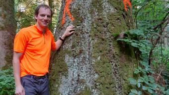 Revierförster Dominik Lüthi aus Bettlach neben einer 49 Meter hohen Fichte
