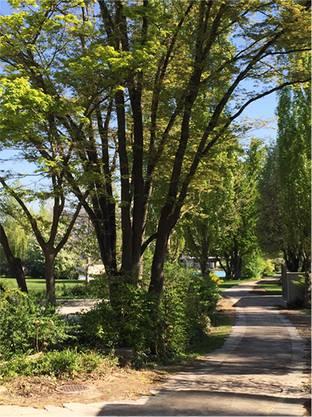 Die Grünen fordern den Stadtrat deshalb auf, die Letzibadi von Mitte September bis Mitte Mai als Stadtpark zu öffnen.