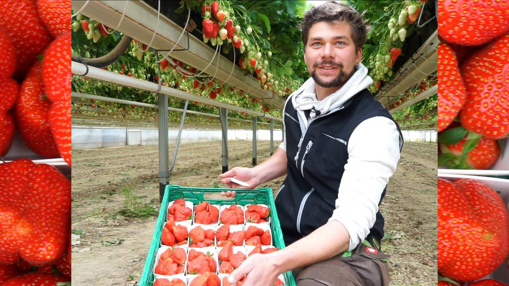 Auf der Suche nach dem perfekten Erdbeeri