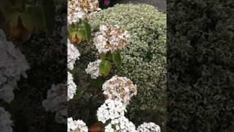 «Das muss ein Video sein, das hier gemacht wird»: Jordans Grossmutter im Garten.