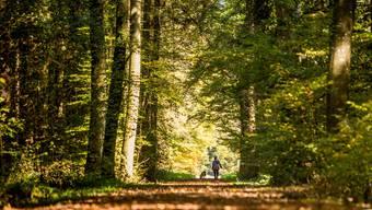 Nicht immer ist der Wald Ort harmonischer Begegnung.
