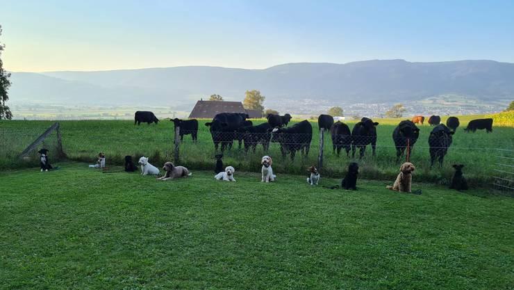 "Ohne Angst vor den ""Grossen"". Auch die kleinen können folgsam sein. Hundeschule Berghof www.hundeschuleberghof.ch"