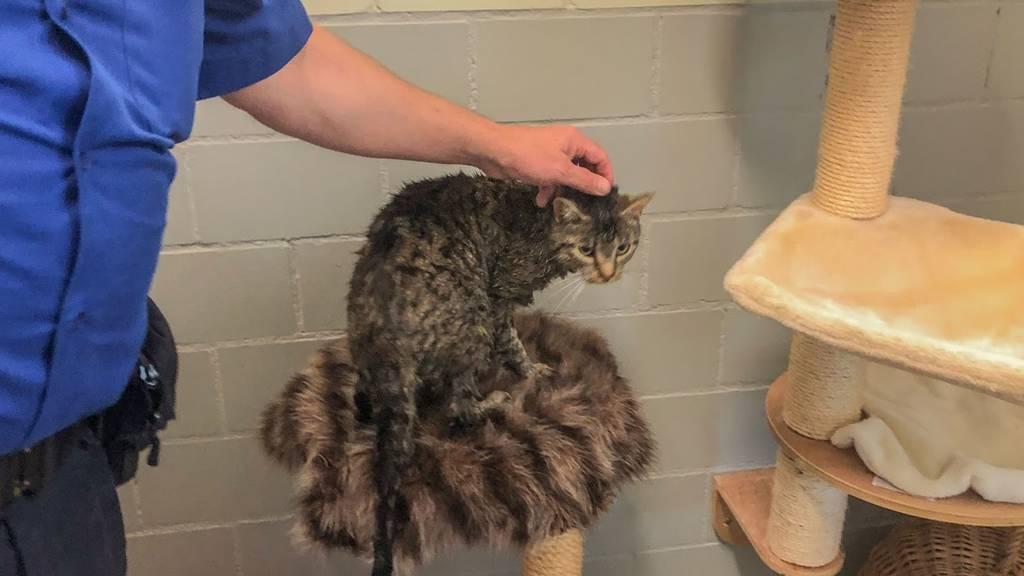 Feuerwehr rettet Katze aus misslicher Lage