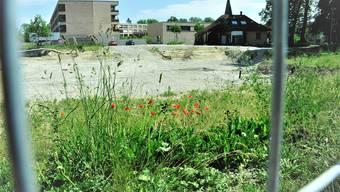 Das Grün spriesst, der Mohn blüht – sonst tut sich nichts auf dem Baufeld 2 (rechts das historische Schützenhaus).