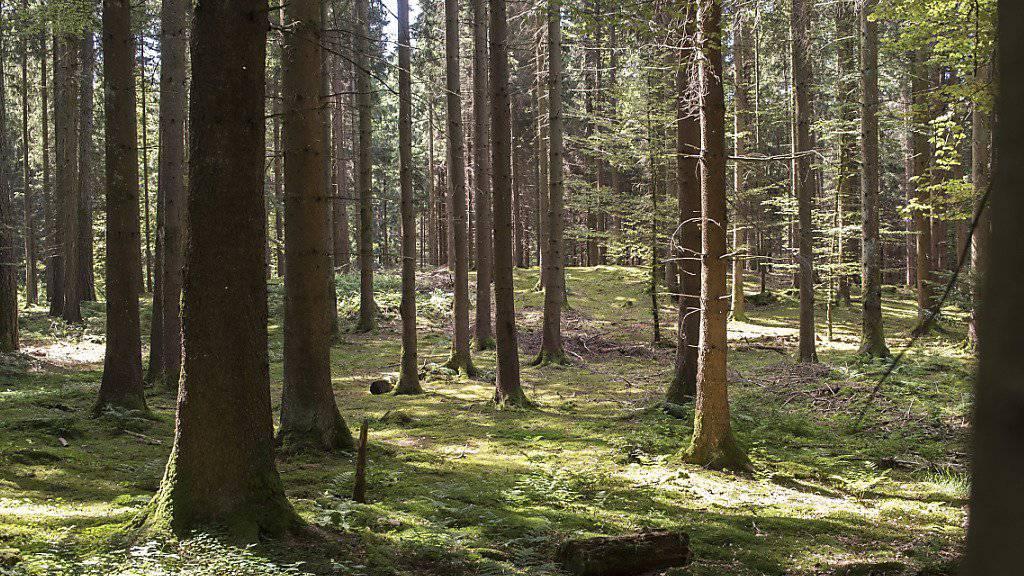 Bäume betreiben untereinander Kohlenstoff-Handel