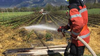 Etwa eine Stunde brauchten die Feuerwehrleute, die Flammen auf dem Erdbeerfeld zu löschen.