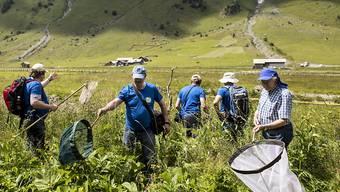 Lepidopterologen, Schmetterlingsforscher, suchen nach Schmetterlingen in Urnenboden im Rahmen des internationalen Geo-Tag der Natur.