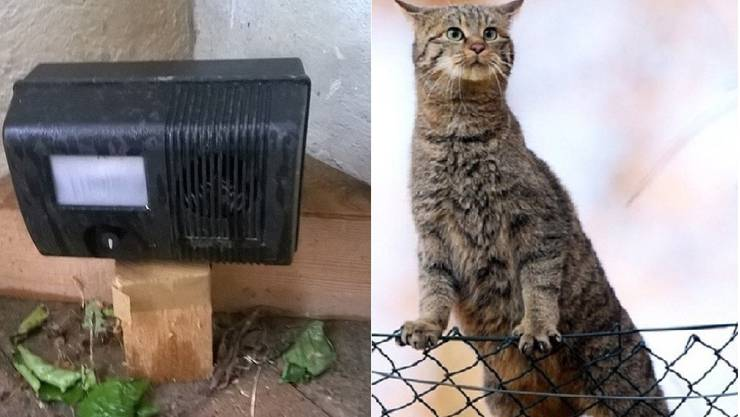 Durch den Katzenschreck sollen Katzen aus dem Garten vertrieben werden. (Symbolbild)
