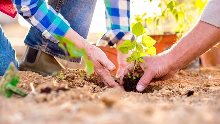 Hilfe bei der Pflanzenpflege: Diese Dienstleistung würden die über 55-jährigen Einwohner von Fislisbach gelegentlich in Anspruch nehmen.