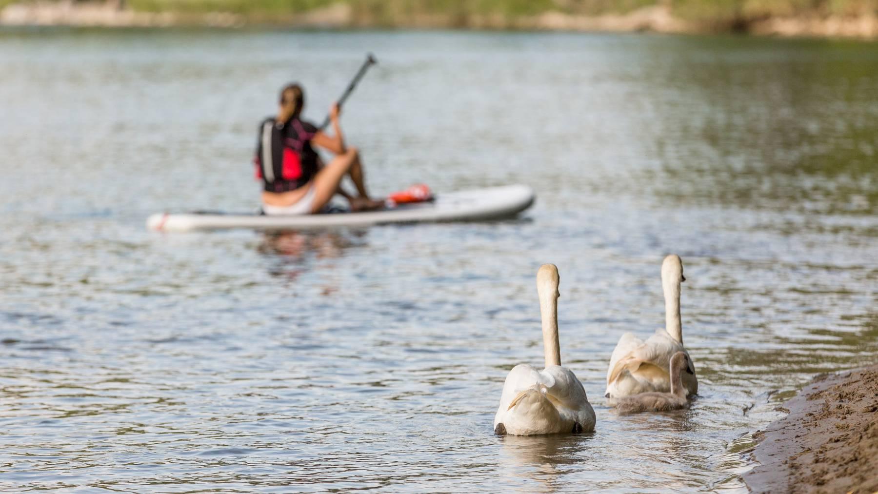 Stand Up Paddler bewegen sich oft im Uferbereich und könnten Brut- und Rastgebiete gefährden. (Symbolbild)