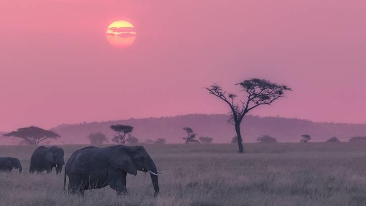 Der Afrikanische Kontinent gilt als wild und naturnah – die Wildnis und Naturnähe spürt man auch in der Afrikanischen Küche.